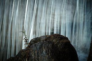 Drakentand rots in de Japanse tuin in Hasselt