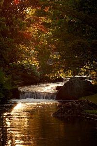 Waterloopje in het gouden uur in de Japanse tuin in Hasselt